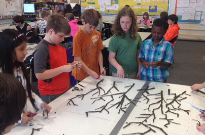 Students working in small groups to arrange their branch pieces in a gradation from widest to the most delicate tips